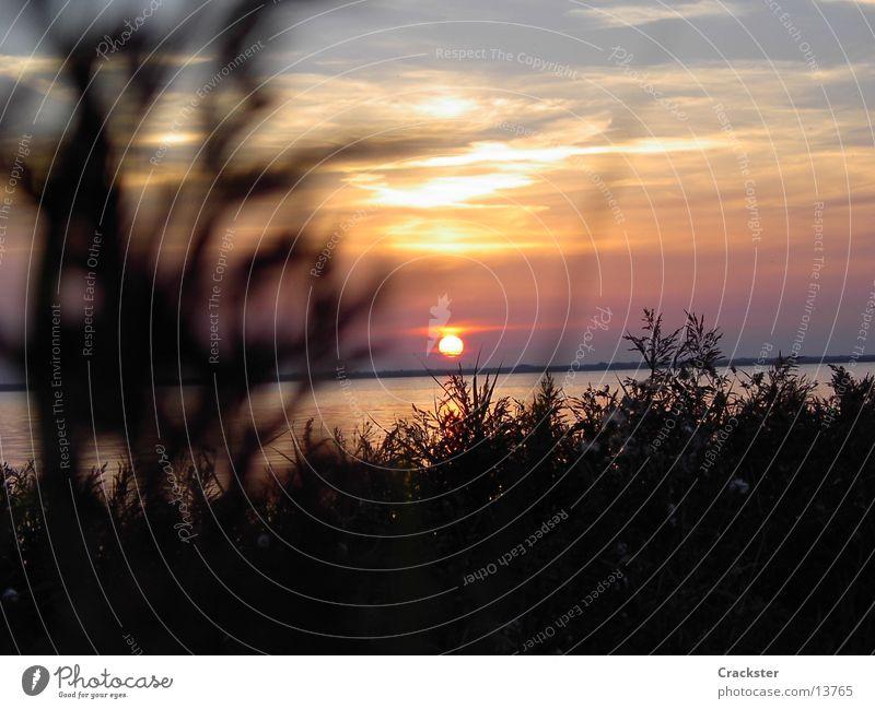 a summerdream Sonne