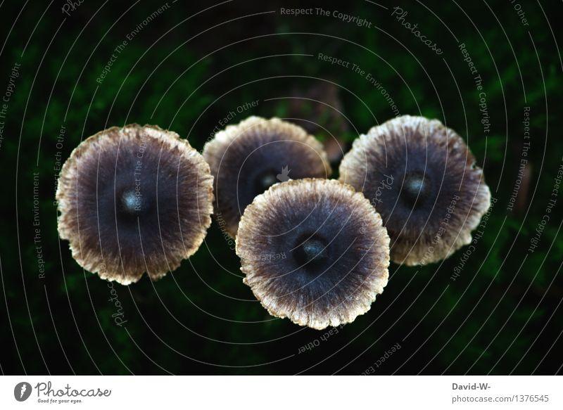 Die vier Hüte Umwelt Natur Landschaft Pflanze Herbst schlechtes Wetter Nutzpflanze exotisch Wald Zusammensein Pilz Waldboden waldbewohner 4 Pilzhut genießbar