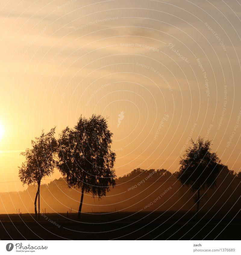 !Trash! 2015 | Summerbreeze Sommer Sommerurlaub Sonne Landschaft Himmel Sonnenaufgang Sonnenuntergang Schönes Wetter Nebel Pflanze Baum Wiese Feld Wald orange