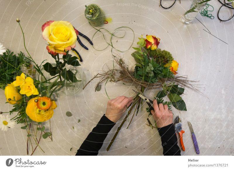 Florist Mensch Pflanze grün schön Blume Hand rot Blatt schwarz gelb Blüte grau Arbeit & Erwerbstätigkeit Design frisch Arme