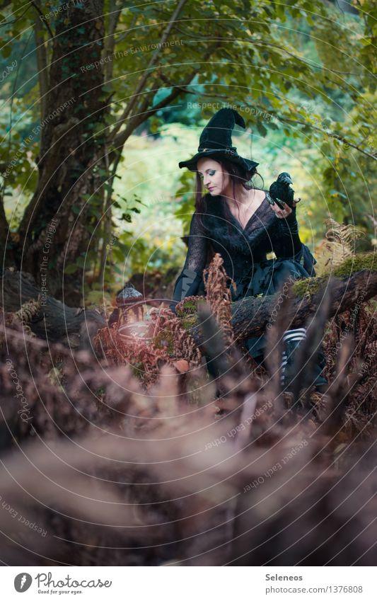 morgen brau ich Mensch Frau Natur Wald Erwachsene Herbst feminin Karneval Hut gruselig Halloween Hexe