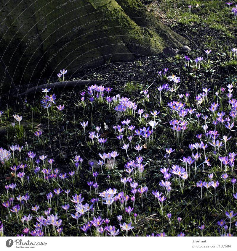 frühling Natur blau grün Baum Pflanze Blume Landschaft Wiese Leben Wärme Frühling Gras Wege & Pfade träumen Beleuchtung Park
