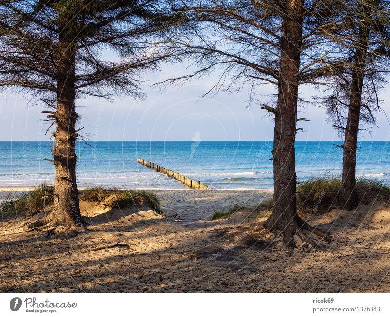 Ostseeküste Erholung Ferien & Urlaub & Reisen Strand Meer Natur Landschaft Wasser Wolken Baum Küste Holz blau Romantik Idylle Tourismus Buhnen Düne Himmel