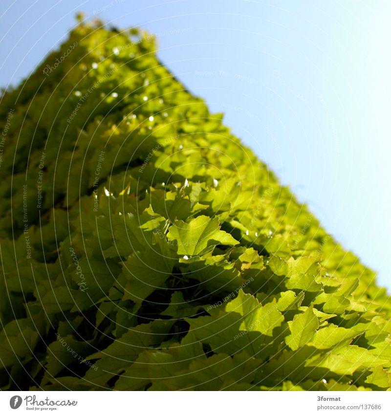 hausecke Himmel Natur blau grün Pflanze Blatt Haus Wand oben Architektur Gebäude Mauer geschlossen mehrere Wildtier Perspektive