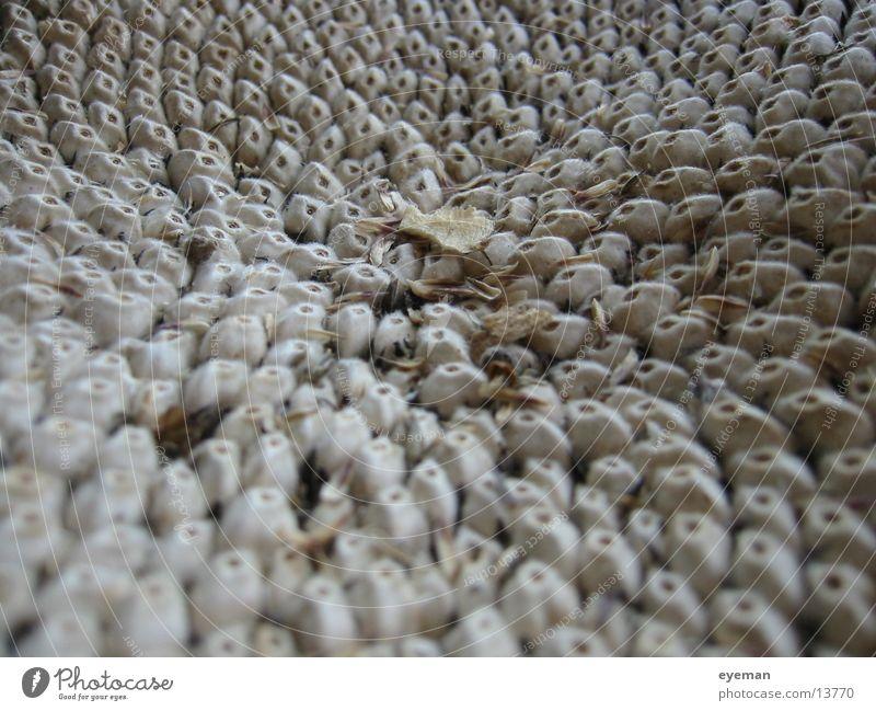 Sonnenblumenkerne trocken beige Samen