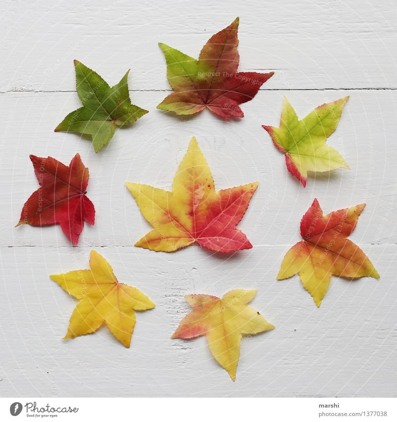 bunter Herbst Natur Pflanze Blatt Stimmung herbstlich rund mehrfarbig gelb rot grün Super Stillleben Garten Farbfoto Studioaufnahme