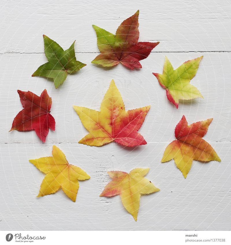 bunter Herbst Natur Pflanze grün rot Blatt gelb Garten Stimmung rund Stillleben herbstlich Super Stillleben