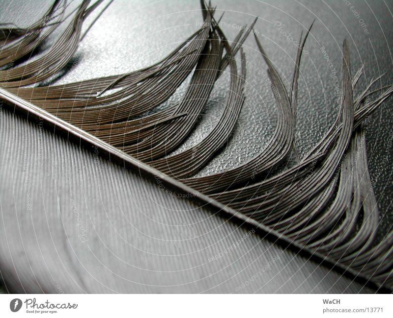 Feder 2 schwarz Vogel Tier Luft Flugtier luftig Schweben Himmel Rabenvögel Krähe Amsel Makroaufnahme Nahaufnahme Natur Detailaufnahme Bird fliegen feather black