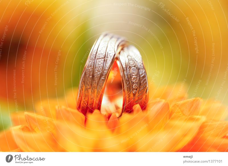 oo Pflanze Blume Accessoire Schmuck Ring gelb gold Kostbarkeit teuer Diamant Diamantring Ehering Farbfoto mehrfarbig Nahaufnahme Detailaufnahme Makroaufnahme