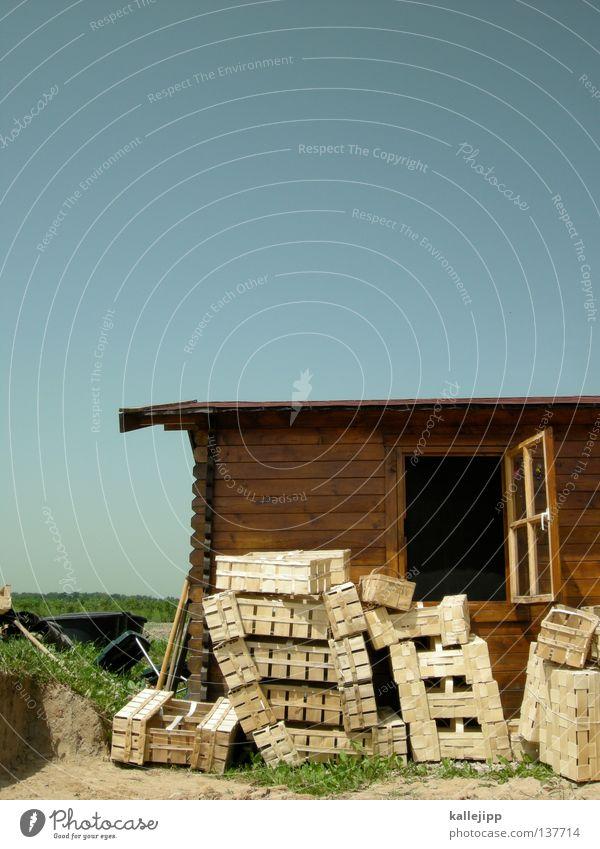 strawberry fields forever Sommer Pflanze Haus Fenster Holz Arbeit & Erwerbstätigkeit offen Feld Wachstum Dach Kultur Landwirtschaft Hütte Dienstleistungsgewerbe