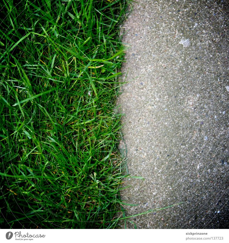 Stadt/Natur (City/Nature) Makroaufnahme Nahaufnahme Stadt (City) Natur (Nature) Rasen (Lawn) Gras (Grass) Textur (Texture) Straße (Street) Asphalt (Tarmac)