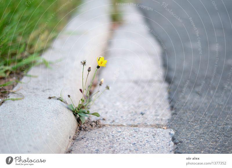 lonely Umwelt Natur Pflanze Blume Gras Straße Bordsteinkante Einsamkeit einzigartig abgelegen hartnäckig Asphalt Farbfoto Außenaufnahme Menschenleer