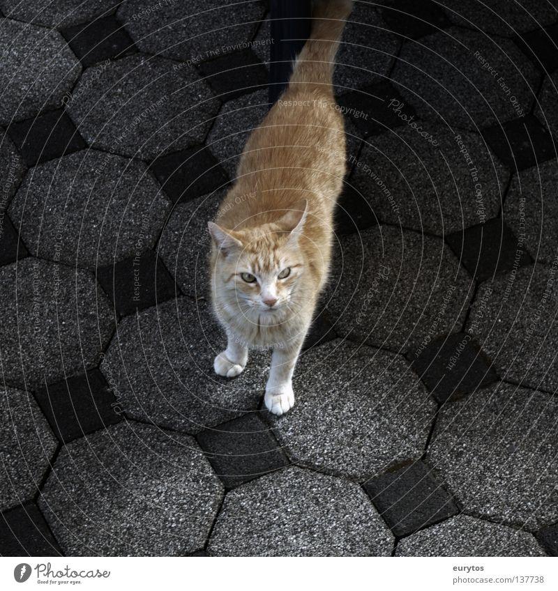 basic instinct 2 rot ruhig Einsamkeit schwarz Erholung grau Katze orange Zufriedenheit gefährlich Bodenbelag Streifen bedrohlich Ohr beobachten Fell