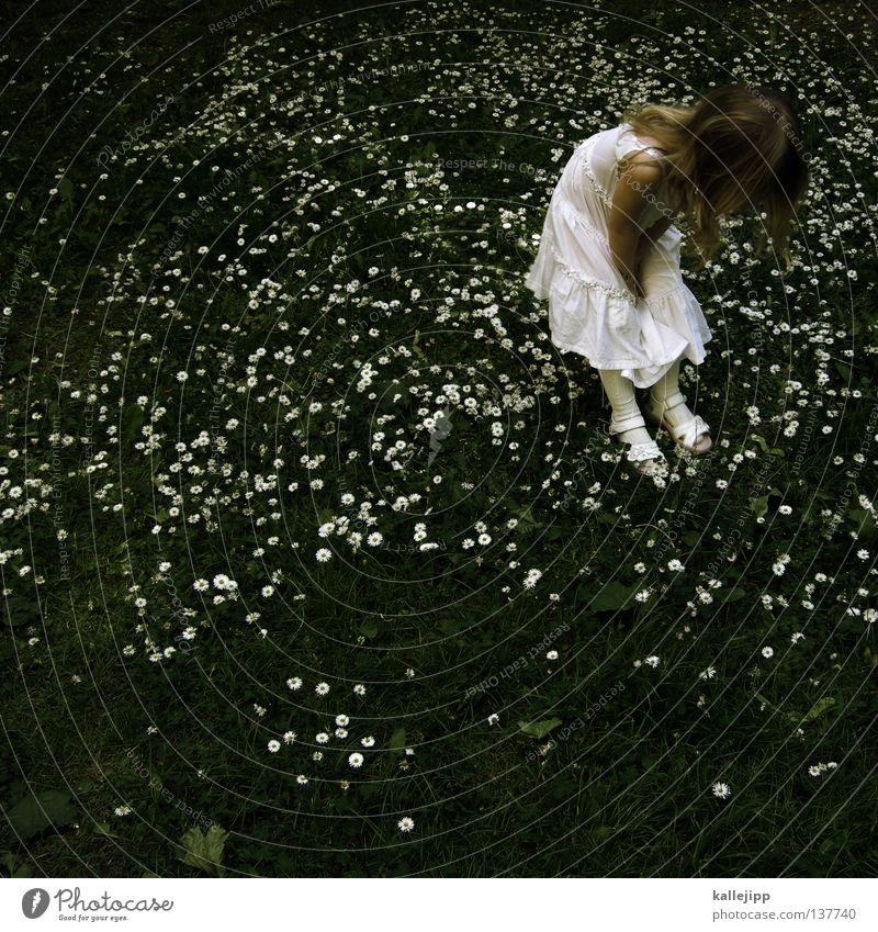 sterntaler Kind Mädchen Kleinkind träumen Blumenwiese Wiese Gras Gänseblümchen Suche Kleid Sommer weiß Schulunterricht Bildung Biologie entdecken niedlich süß