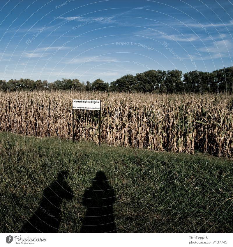 Gentechnikfreie Region Himmel grün Ernährung Feld Schilder & Markierungen Hinweisschild Rasen Landwirtschaft Ackerbau Genetik ländlich Mais Gensequenz