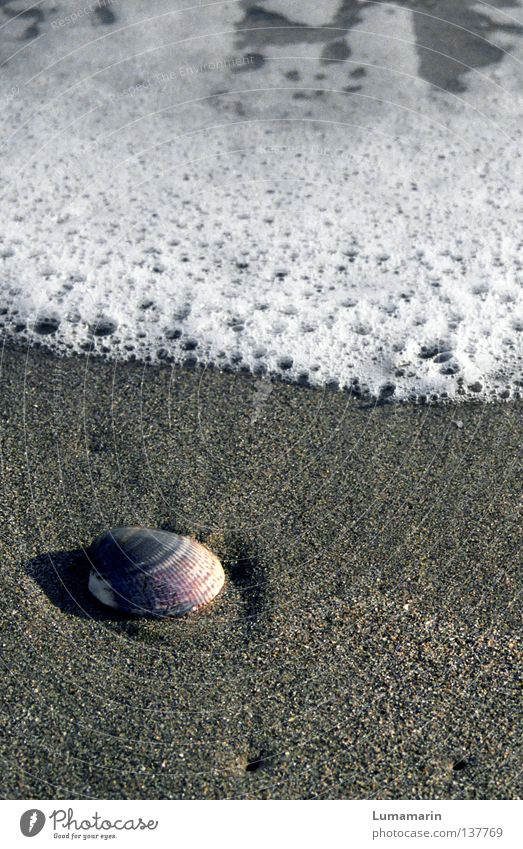 Abschiedsgeschenk Wasser schön Meer Ferien & Urlaub & Reisen Strand ruhig Einsamkeit Erholung Sand Küste Wellen leer Ecke rund Trauer weich