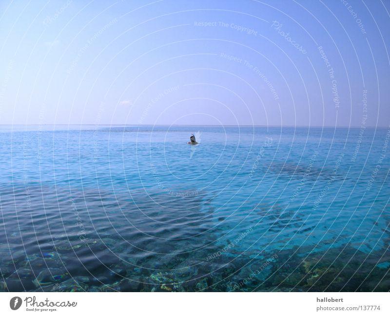 Malediven Water 18 Wasser Meer tauchen Malediven Riff Schnorcheln
