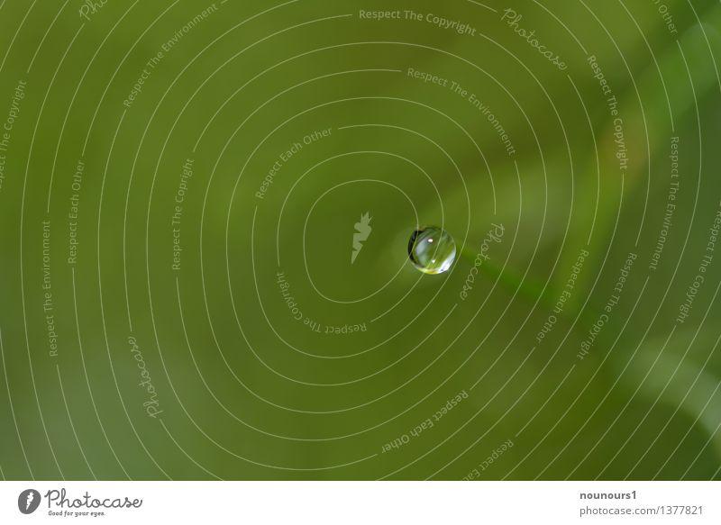Waterdrop Natur Pflanze Wasser Wassertropfen Regen außergewöhnlich einfach Flüssigkeit glänzend grün Gras Halm Reflexion & Spiegelung Spitze Farbfoto