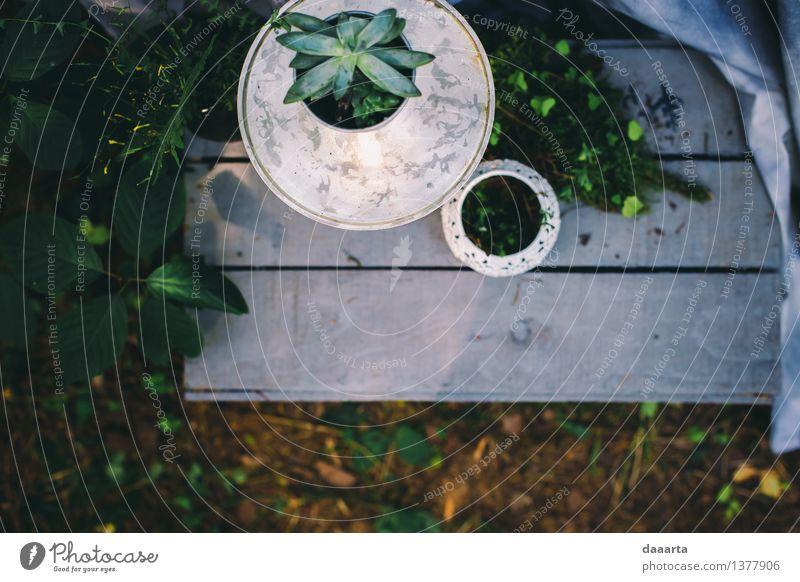 Waldumgebung Natur Ferien & Urlaub & Reisen Pflanze Sommer Blume Blatt Freude Leben Innenarchitektur Gras Stil Lifestyle Freiheit Stimmung Party