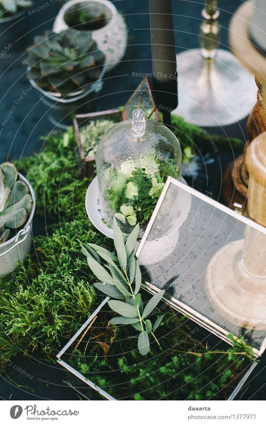 Sitzordnung bei Tisch Natur Pflanze Sommer Erholung Blatt Freude Leben Gras Stil Lifestyle Freiheit Stimmung Party Design Freizeit & Hobby elegant