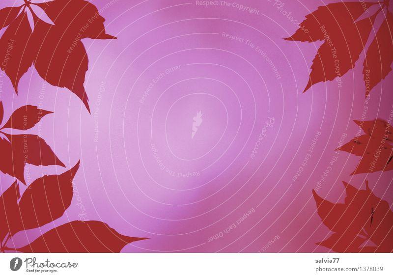 Blätterrahmen in rot Erholung Blatt Herbst Hintergrundbild Stimmung rosa Design Perspektive Hoffnung Wellness violett Glaube harmonisch Rahmen Sinnesorgane