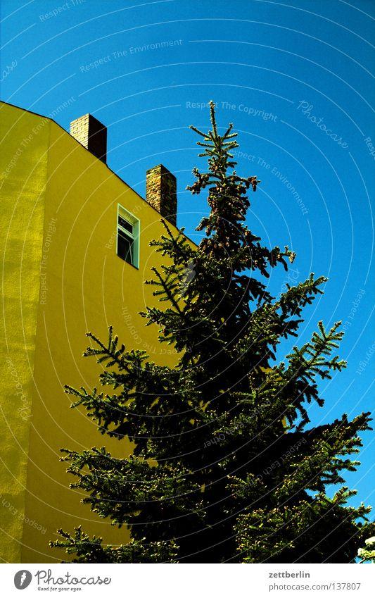 Weihnachtsvorbereitung Himmel blau grün Baum Haus Fenster Park Fassade Weihnachtsbaum Schornstein Stadthaus himmelblau Nadelbaum Fichte roh Vorgarten