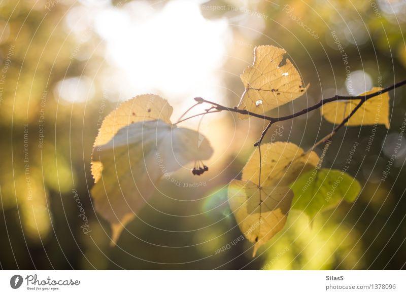 Herbstlich(t) Umwelt Natur Sonne Pflanze Baum Blatt Ast Park braun gelb gold grün orange schwarz Zufriedenheit Gelassenheit Farbfoto Außenaufnahme Menschenleer