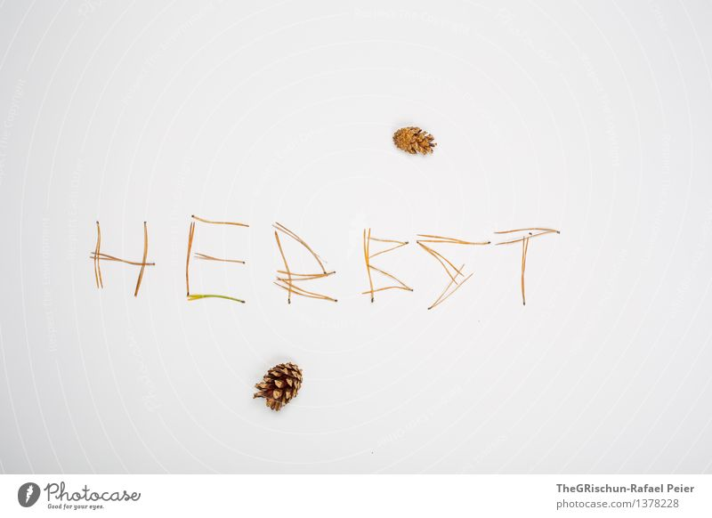 Herbst Natur braun gelb gold grau weiß Zapfen Tannennadel Logo Buchstaben Wort Nadelbaum Farbfoto Innenaufnahme Studioaufnahme Menschenleer Freisteller