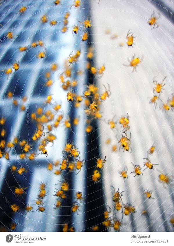 Invasion Mit Acht Beinen blau Tier gelb dunkel Freiheit Holz Metall Angst klein Wachstum mehrere Netz Tiergruppe Insekt