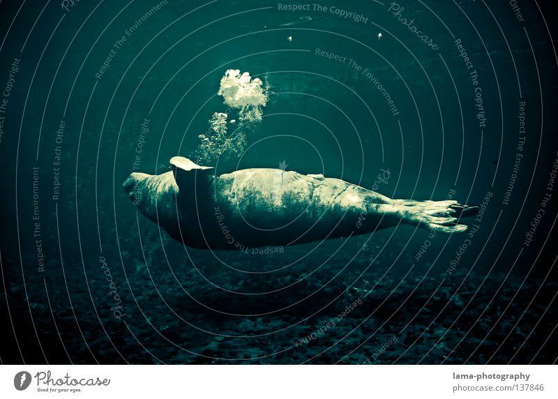 majestic Wasser Meer Tier Erholung träumen Fisch tauchen Klarheit genießen tief atmen Säugetier Unterwasseraufnahme Luftblase Schweben