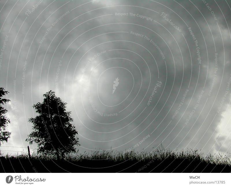 Gewitterstimmung2 Baum Wolken schwarz Stimmung gefährlich Wald Holzmehl dunkel grauenvoll halbdunkel Donnern Sturm Gefühle Macht beängstigend Zaun Landschaft