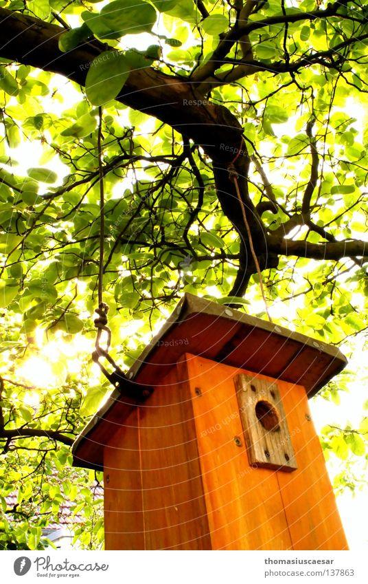 Der Frühling ist da! Baum Futterhäuschen Holz braun grün Licht Physik frisch Kraft Vogel orange hell Wärme Schutz Kindheit