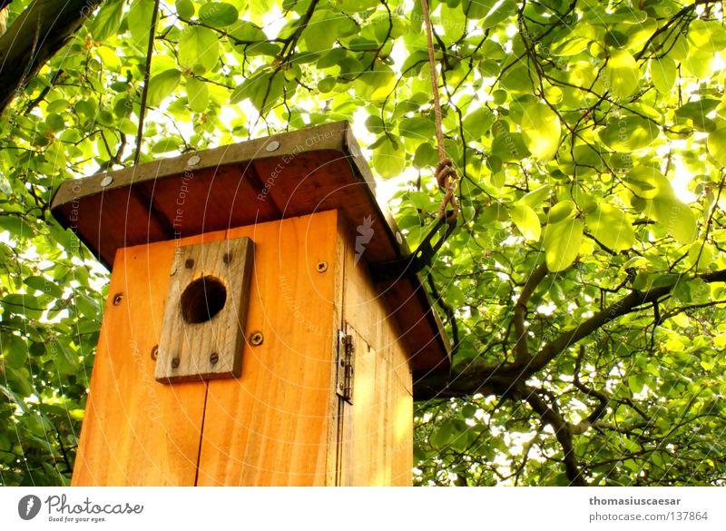 Das Warten auf Junge. Baum Futterhäuschen Holz braun grün Physik frisch Kraft Vogel Frühling orange hell Wärme Schutz Kindheit