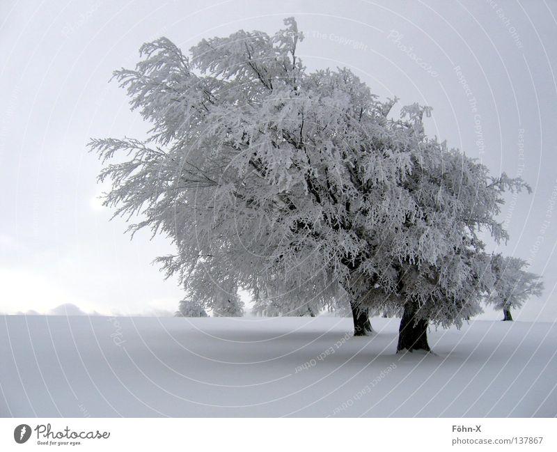 Winterstimmung Baum dunkel kalt Schnee Landschaft Eis Nebel