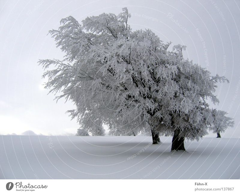Winterstimmung Baum Winter dunkel kalt Schnee Landschaft Eis Nebel