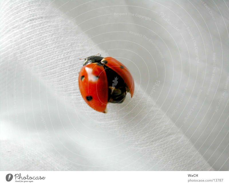Marienkäfer 1 Insekt Holz Ecke Stoff krabbeln Maikäfer Holzmehl Natur rot gepunktet Am Rand Feinripp Schiffsbug Sommer Frühling Garten Park Käfer fliegen