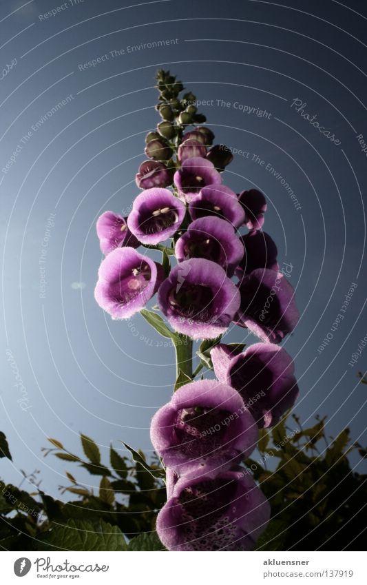 Wolkenkratzer Himmel grün blau Pflanze Farbe dunkel Blüte Beleuchtung mehrere violett Punkt unten viele Gift Hecke Blütenkelch