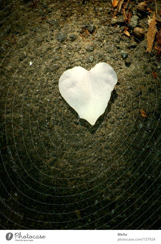 Herzblatt weiß Blatt Liebe dunkel Blüte Wege & Pfade Stein hell rosa liegen planen Asphalt fallen obskur Partnerschaft