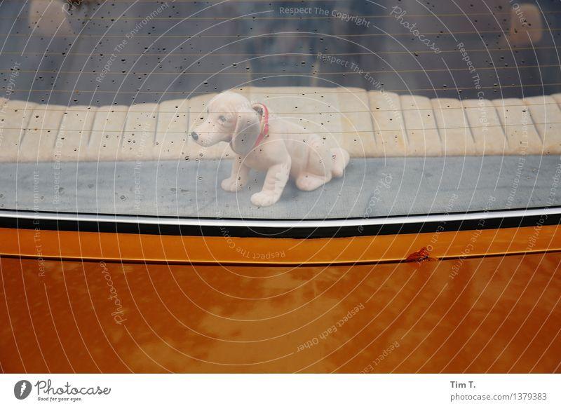 Wackeldackel Tier Hund 1 Spielzeug Puppe Stofftiere Kitsch Dackel wackeln PKW Ablage Regen Autofenster Farbfoto Außenaufnahme Menschenleer Textfreiraum oben