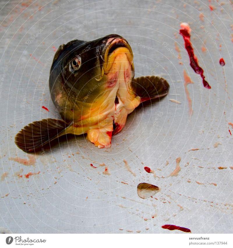 Fischkopp Ernährung Fisch Krieg Blut Lebensmittel Schlacht Fischkopf