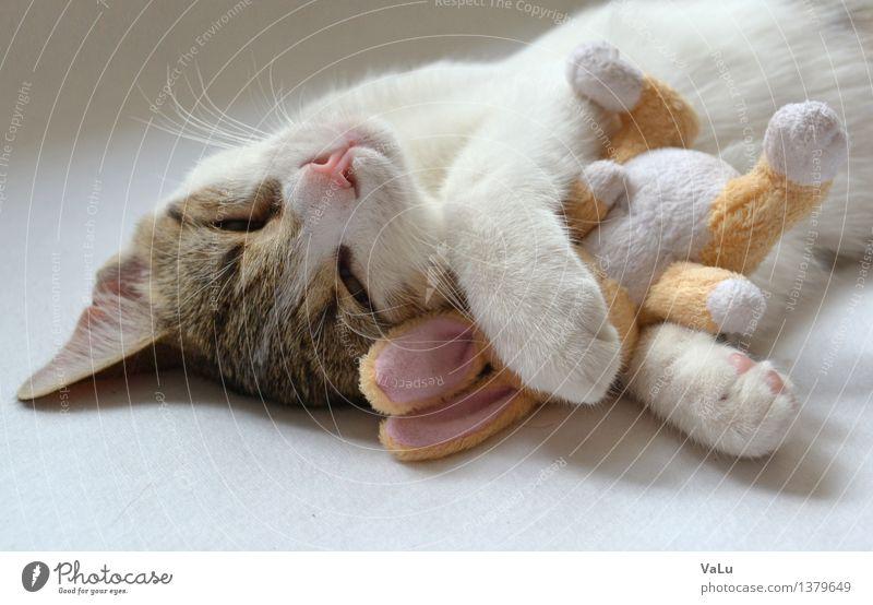 Miró mit Kuschelhäschen Tier Haustier Katze Tiergesicht Fell Pfote 1 Tierjunges Liebe Geborgenheit Warmherzigkeit Farbfoto Innenaufnahme Hintergrund neutral Tag