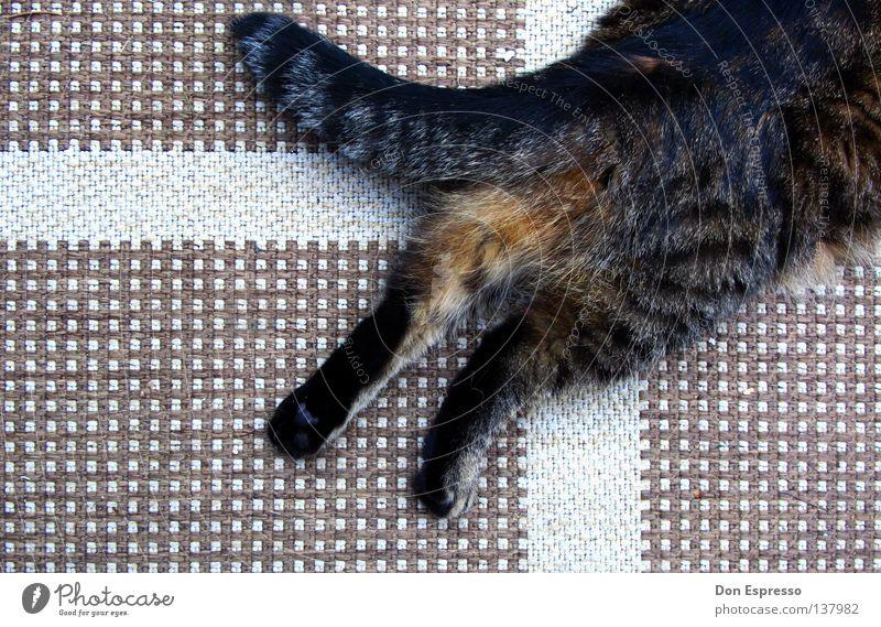 Catflag Katze Teppich Pfote Schwanz Fell Tier Haustier Muster weich Krallen Säugetier Rücken Mietze Pussy Hauskatze Bodenbelag getigert Hinterteil