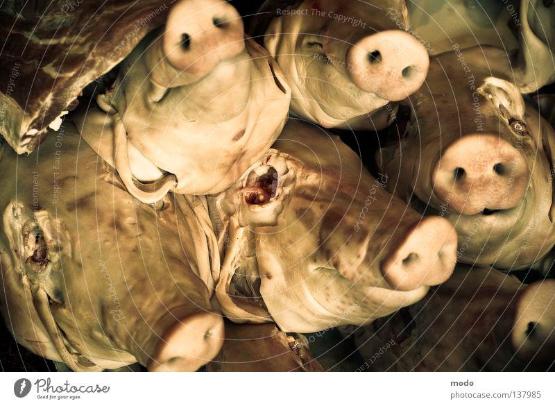 #*%schweinebande! Tier Tod Angst Veranstaltung Panik Schwein Steckdose Demonstration blind Schnitzel Schlitzohr