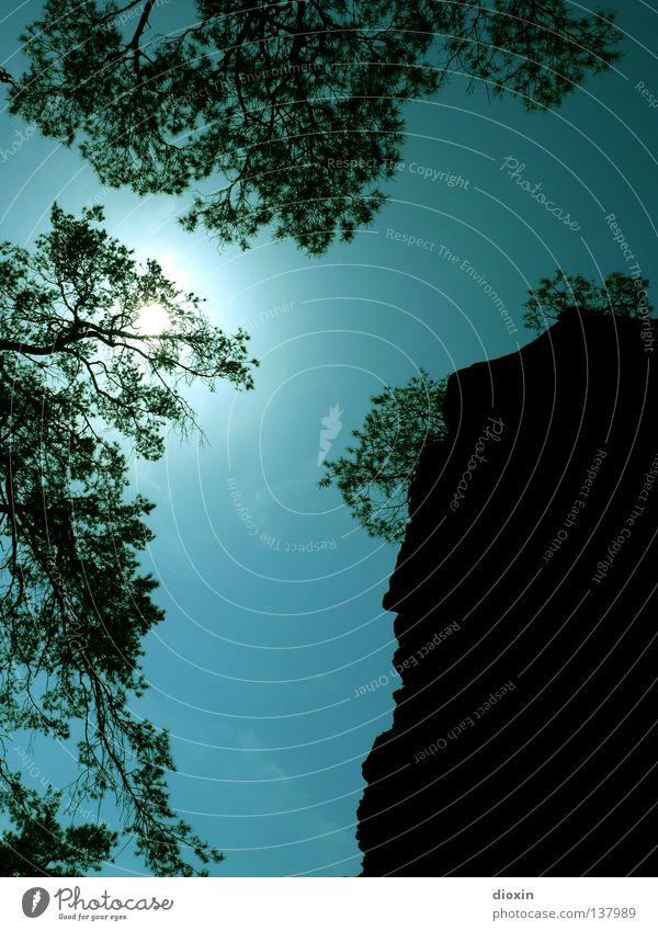Aufwärts 2 Sträucher Baum Blatt Sandstein Gegenlicht steil vertikal Bergsteigen Freeclimbing Pfälzerwald Rheinland-Pfalz wandern Aussicht türkis Hoffnung