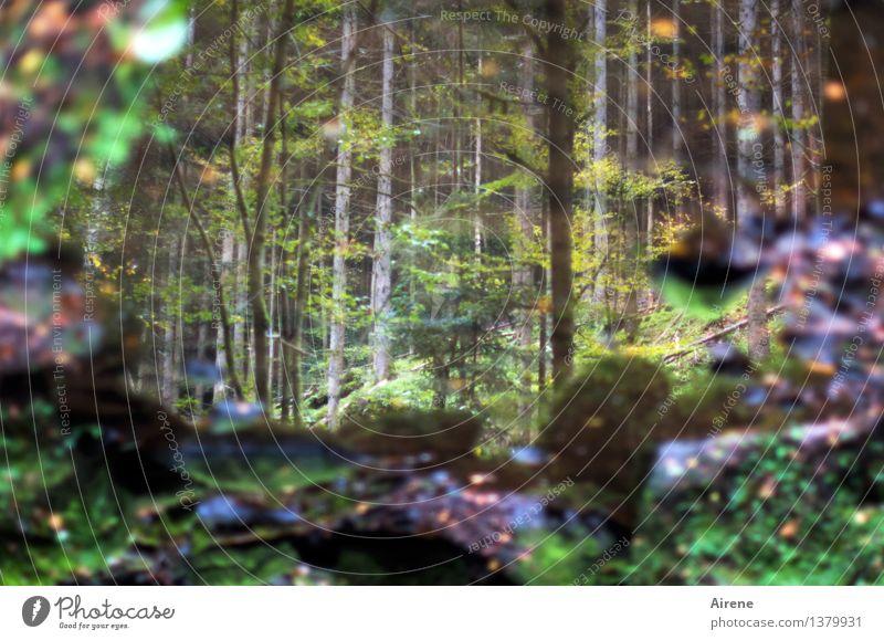 als das Wünschen noch geholfen hat Umwelt Natur Landschaft Herbst Baum Moos Herbstlaub Wald Seeufer Moor Sumpf Teich Wasserspiegelung außergewöhnlich dunkel