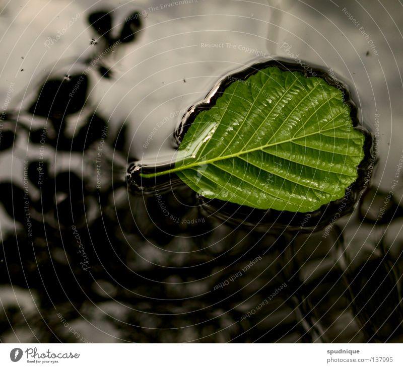 oberflächlichkeit überwinden grün Frühling Sommer hellgrün Blatt Gefäße Blattadern frisch Baum Reflexion & Spiegelung gleiten Geäst Wolken Oberfläche