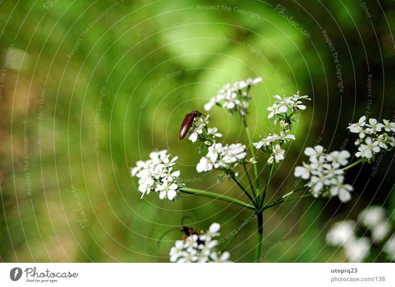 Käferleben Blume grün Blüte Natur Scharfentiefe