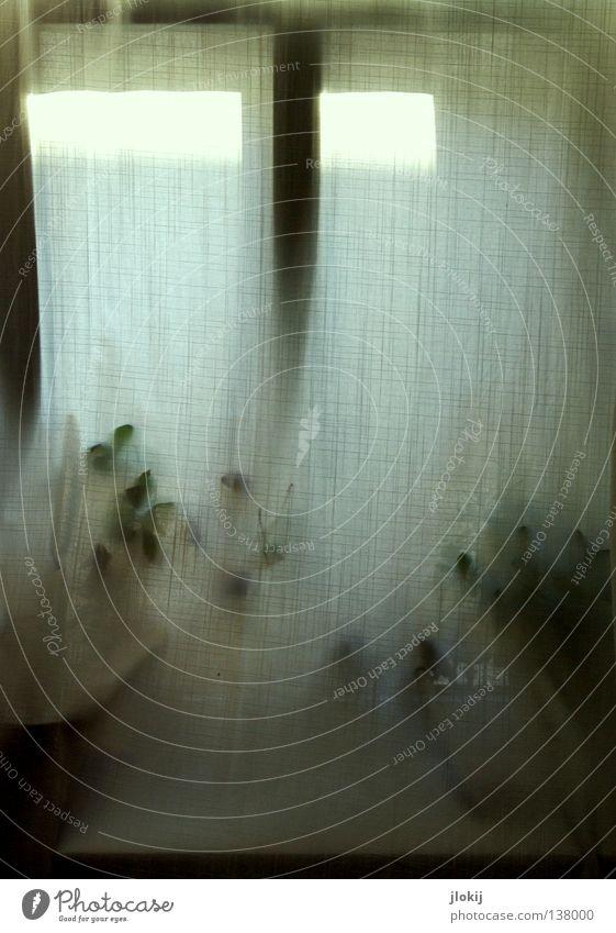 Andeutung II Natur weiß grün Pflanze Blume Blatt Fenster Linie Wohnung Stoff berühren Vorhang Material Gardine kariert Durchblick