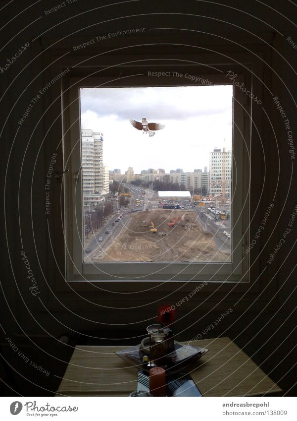 Fenster zum Alex Himmel Stadt trist Baustelle Verkehrswege Rahmen trüb eckig Alexanderplatz