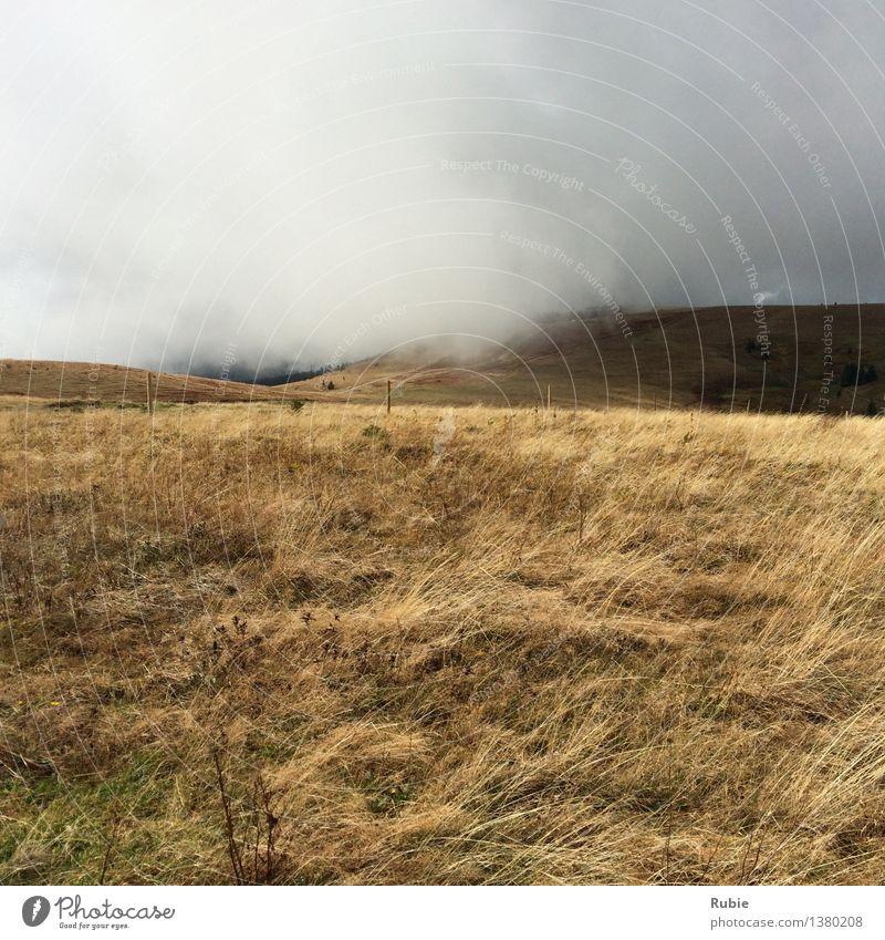Wolken und Nebel Himmel Pflanze weiß Erholung Einsamkeit Landschaft Ferne Umwelt gelb Herbst Wiese Gras Wege & Pfade natürlich grau